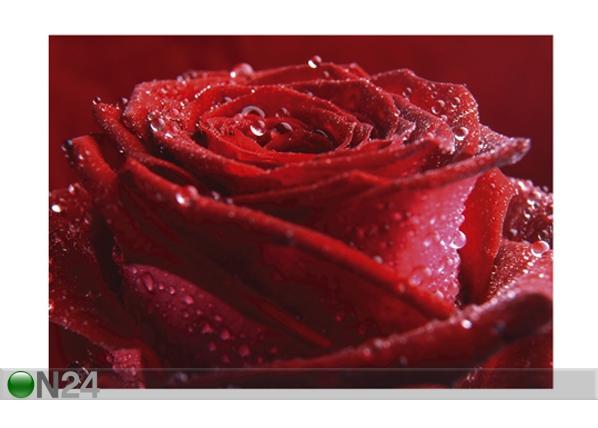 Kuvatapetti PROUD RED ROSE 400x280 cm ED-88128