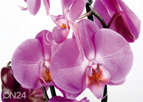 Fliis-fototapeet Orchids 2, 360x270 cm ED-94808