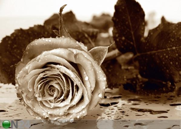 Fliis-fototapeet Roses 360x270 cm ED-94810