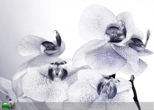 Fleece kuvatapetti ORCHIDS 3 360x270 cm ED-94811