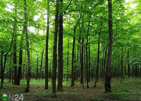 Fleece kuvatapetti FOREST 360x270 cm ED-94826