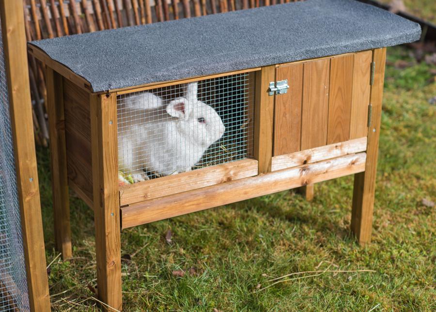 Kanikoppi Rabbit 1