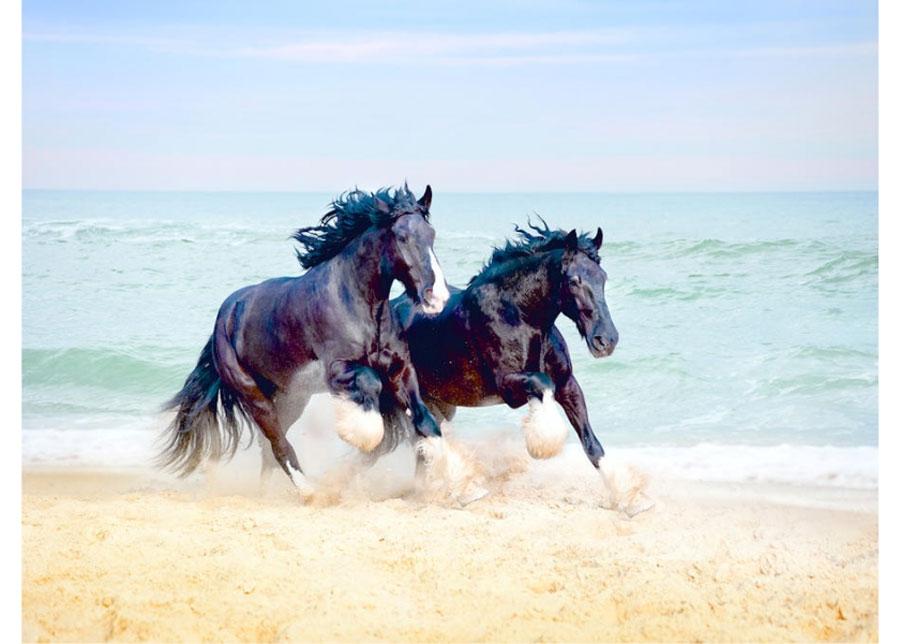 Fleece-kuvatapetti HORSES 360x270 cm