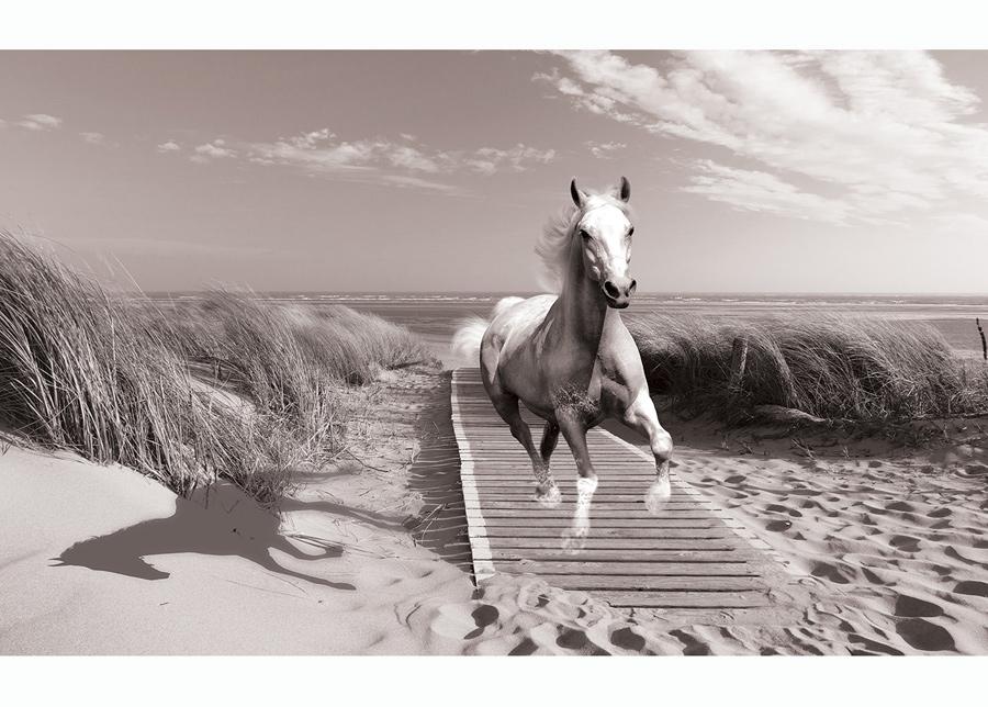 Kuvatapetti White Horse Beach Black And White 416x254 cm