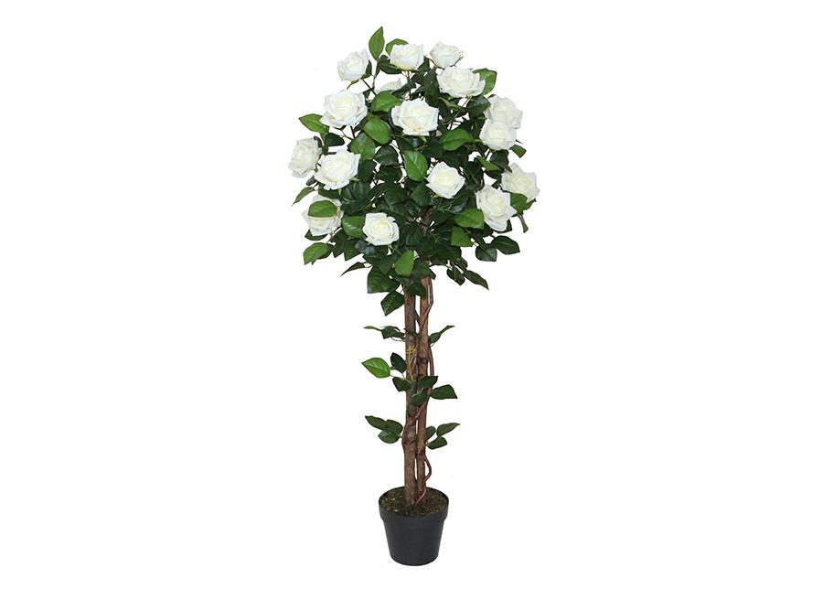 Koristekasvi Ruusu 120 cm