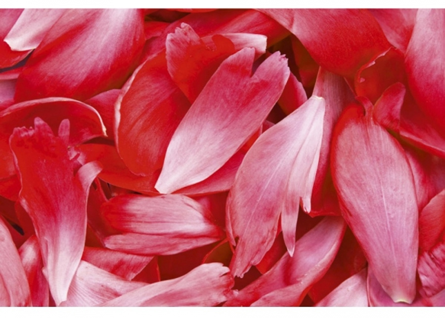 Fleece-kuvatapetti Red petals 150x250 cm