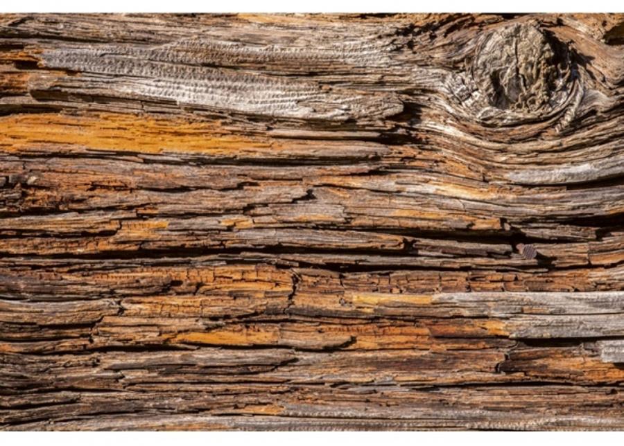 Fleece-kuvatapetti Tree bark 375x250 cm