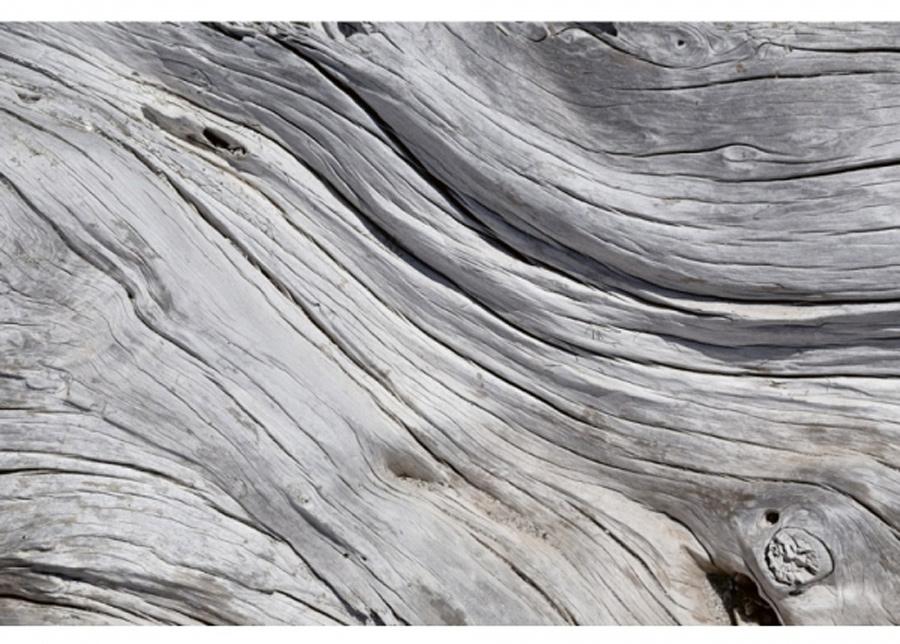 Fleece-kuvatapetti Tree texture 375x250 cm