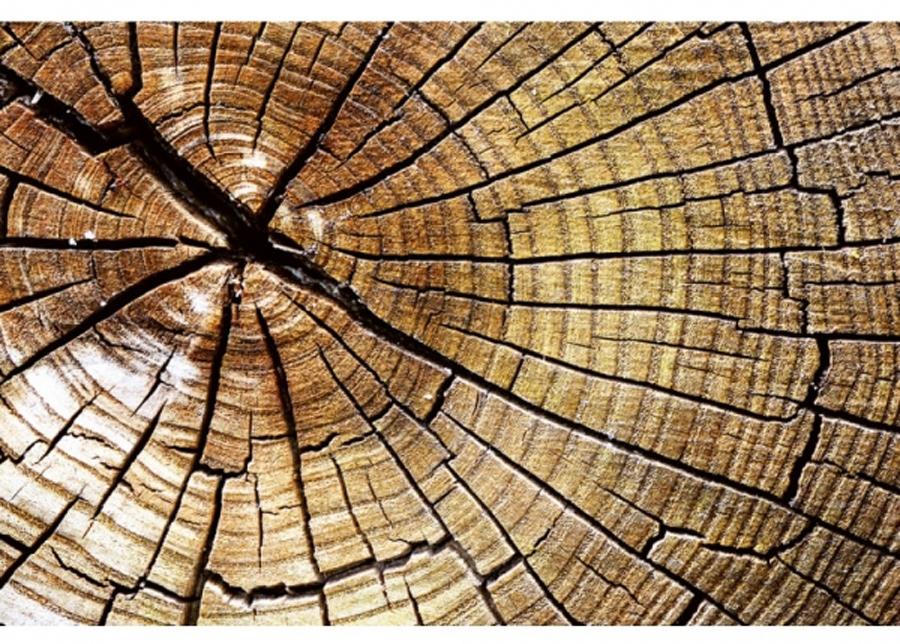 Fleece-kuvatapetti Wood 225x250 cm