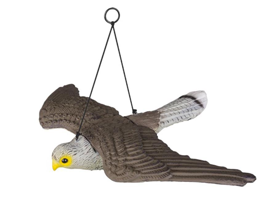 Linnunpelätin Lentävä haukka