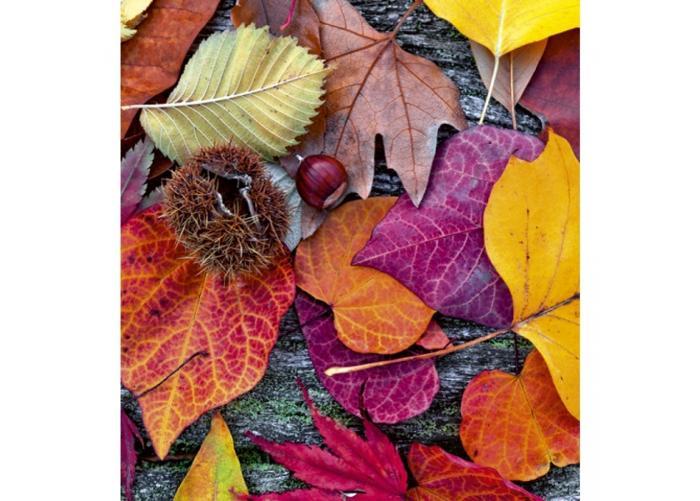 Fleece-kuvatapetti Autumn leaves 225x250 cm