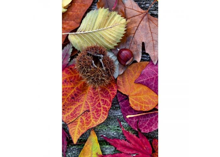Fleece-kuvatapetti Autumn leaves 150x250 cm