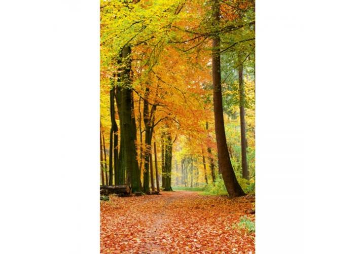 Fleece-kuvatapetti Autumn forest 150x250 cm