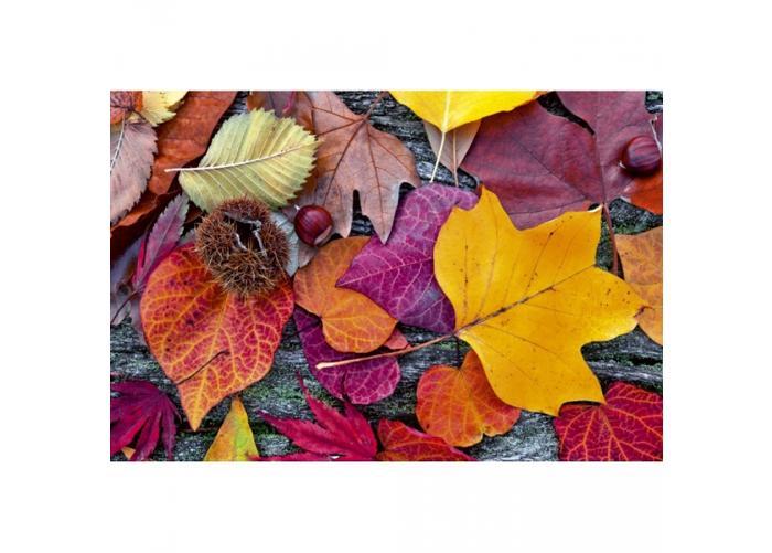 Fleece-kuvatapetti Autumn leaves 375x250 cm