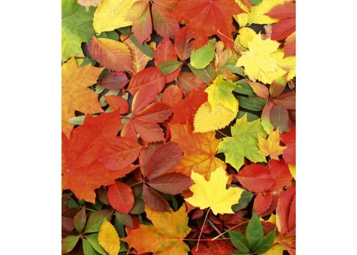 Fleece-kuvatapetti Colourful leaves 225x250 cm