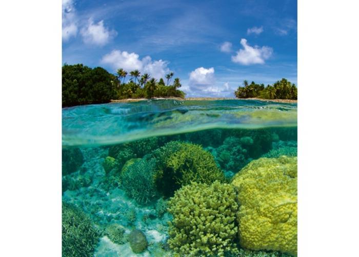 Fleece-kuvatapetti Coral reef 225x250 cm