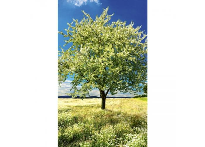 Fleece-kuvatapetti Blossom tree 150x250 cm