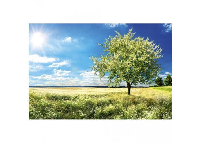 Fleece-kuvatapetti Blossom tree 375x250 cm