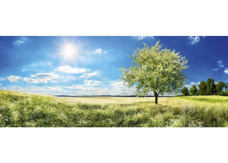 Fleece-kuvatapetti Blossom tree 375x150 cm