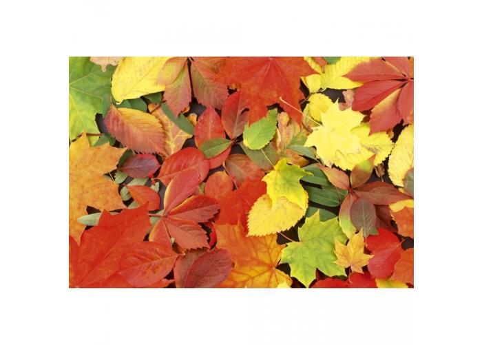 Fleece-kuvatapetti Colourful leaves 375x250 cm