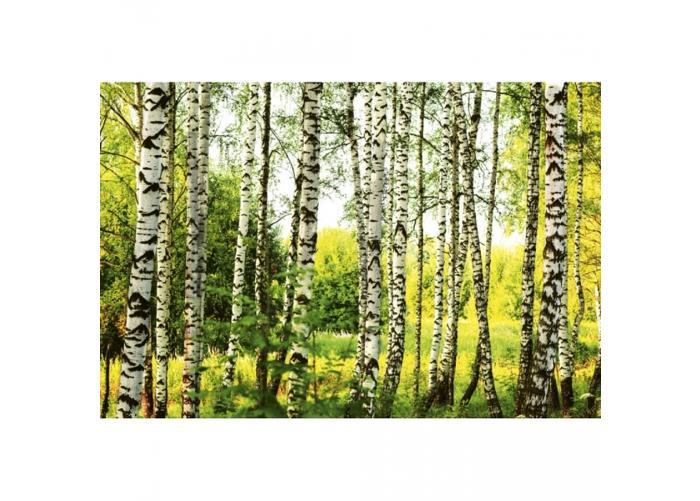 Fleece-kuvatapetti Birch forest 375x250 cm