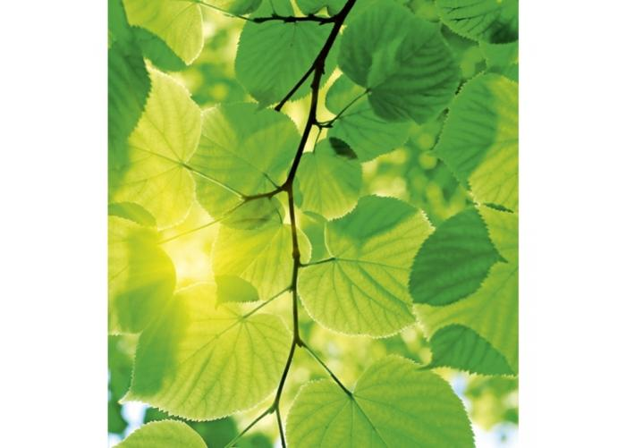 Fleece-kuvatapetti Green leaves 225x250 cm