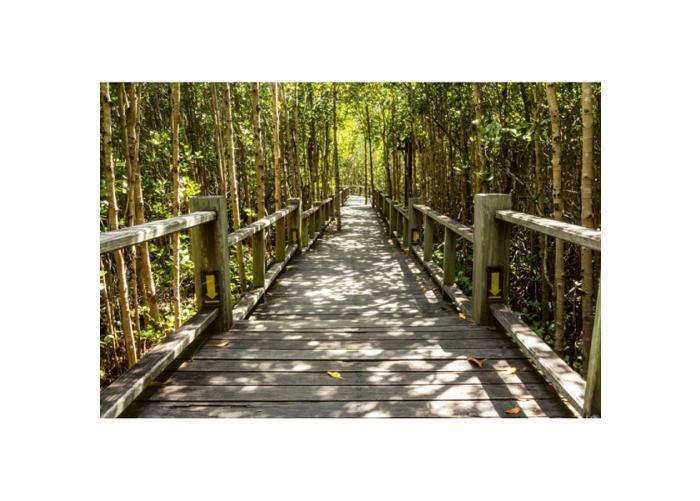 Fleece-kuvatapetti Mangrove forest 375x250 cm
