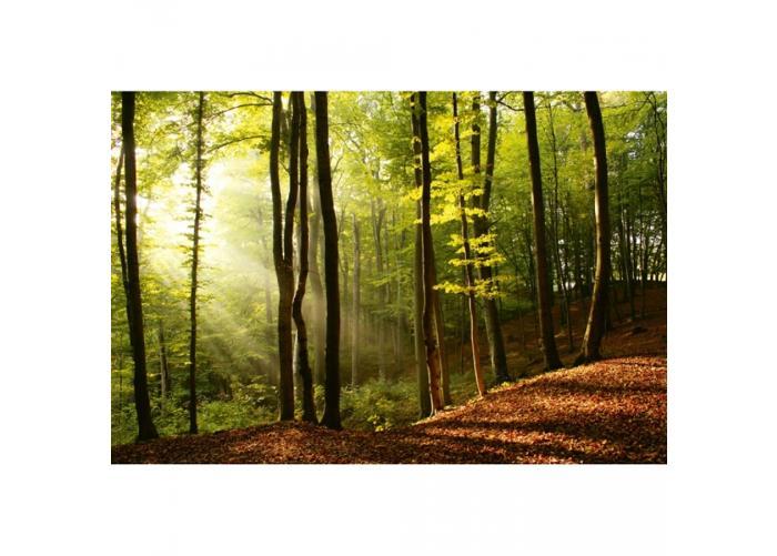 Fleece kuvatapetti Forest 375x250 cm