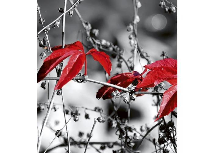 Fleece kuvatapetti Red leaves on black 225x250 cm