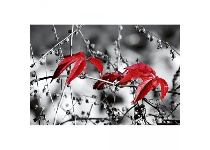 Fleece-kuvatapetti Red leaves on black 375x250 cm