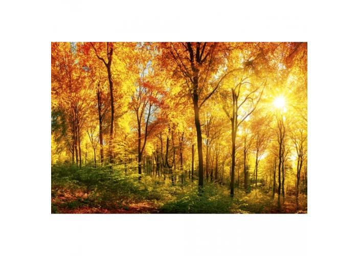 Fleece-kuvatapetti Sunny forest 375x250 cm