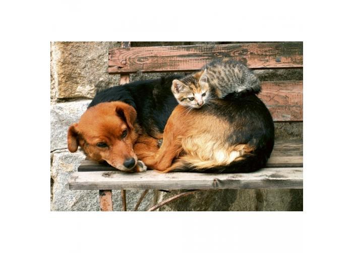 Fleece kuvatapetti Cat and dog 375x250 cm