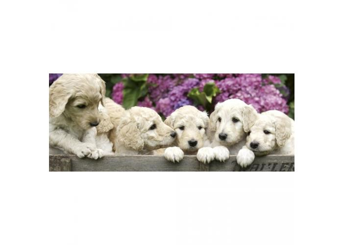 Fleece-kuvatapetti Labrador puppies 375x150 cm