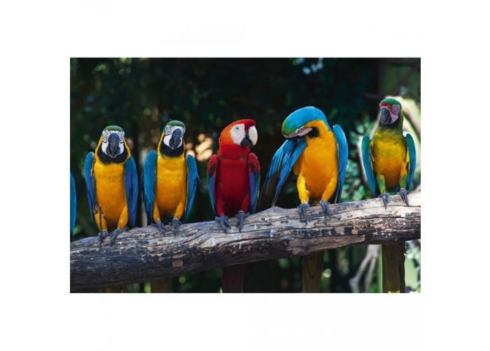 Fleece-kuvatapetti Colourful macaw 375x250 cm