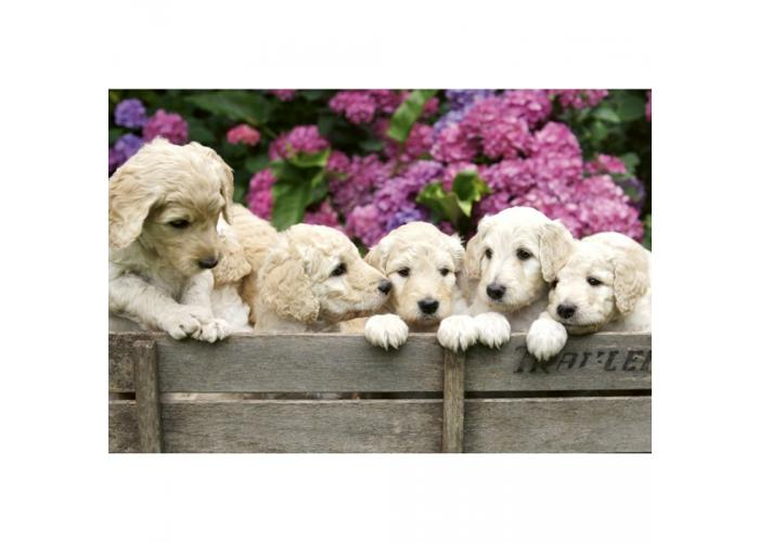Fleece-kuvatapetti Labrador puppies 375x250 cm
