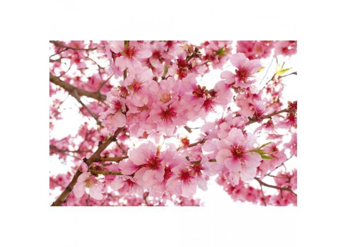 Fleece kuvatapetti Apple blossom 375x250 cm