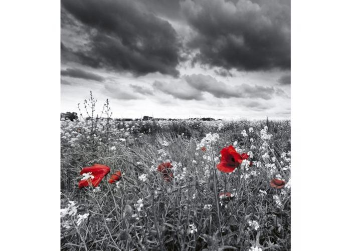 Fleece kuvatapetti Poppies black 225x250 cm