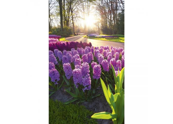 Fleece kuvatapetti Hyacint flowers 150x250 cm