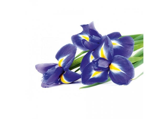 Fleece kuvatapetti Iris 375x250 cm