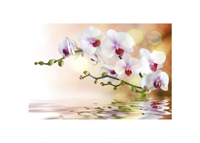 Fleece kuvatapetti White orchid 375x250 cm