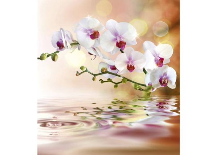 Fleece kuvatapetti White orchid 225x250 cm