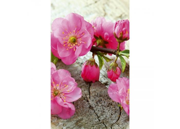 Fleece kuvatapetti Sakura 150x250 cm