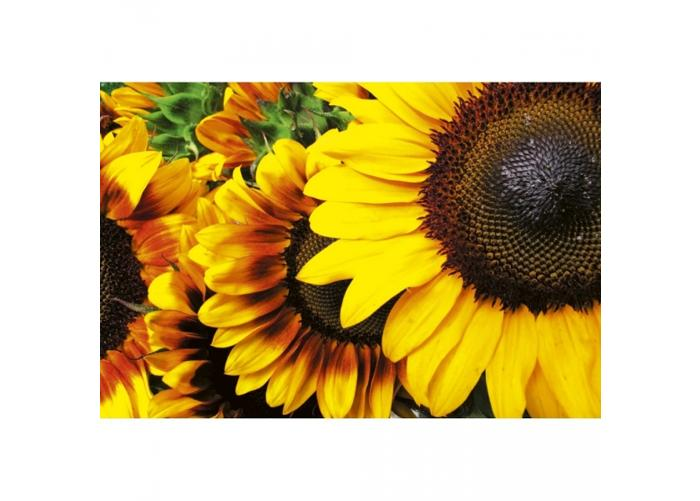 Fleece kuvatapetti Sunflowers 375x250 cm