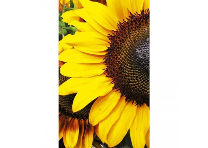 Fleece kuvatapetti Sunflowers 150x250 cm
