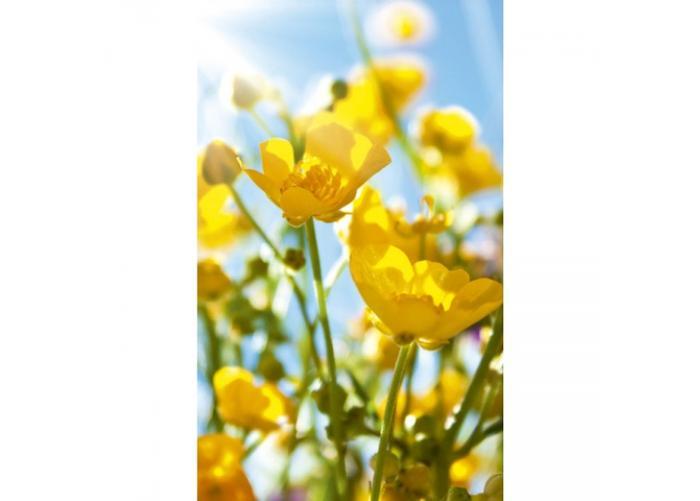 Fleece kuvatapetti Yellow flowers 150x250 cm