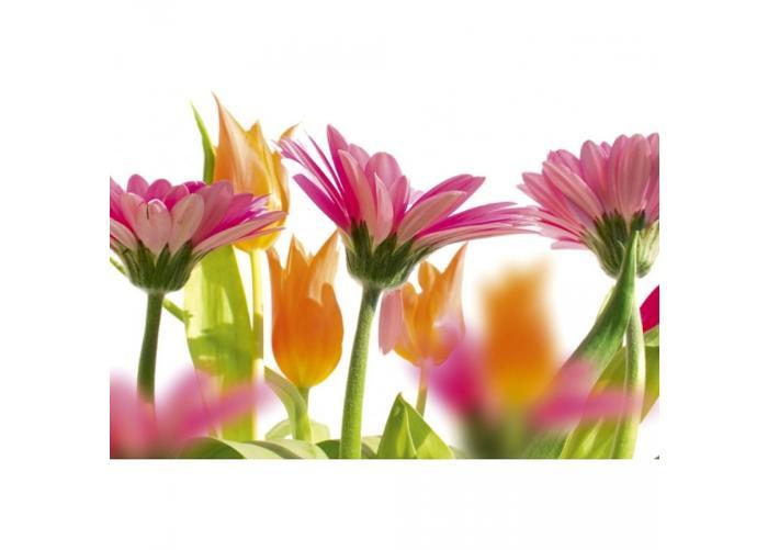 Fleece kuvatapetti Spring flowers 375x250 cm