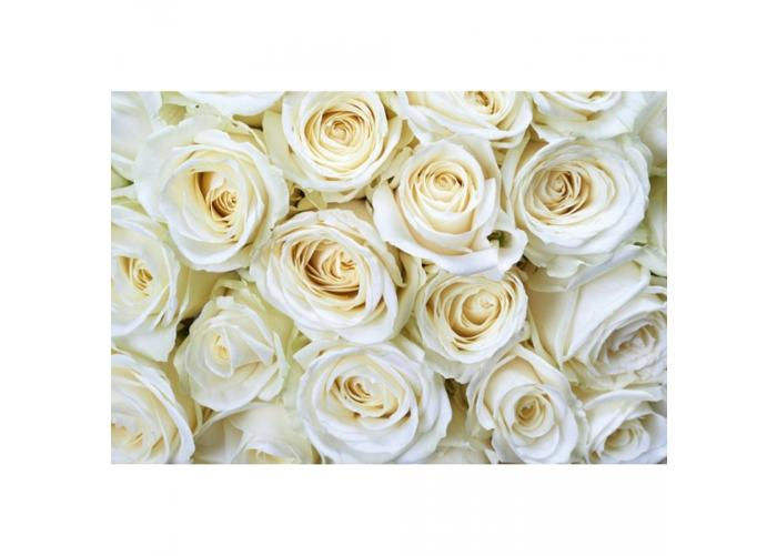 Fleece kuvatapetti White roses 375x250 cm