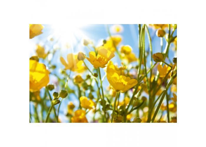 Fleece kuvatapetti Yellow flowers 375x250 cm