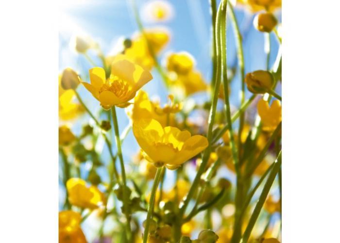 Fleece kuvatapetti Yellow flowers 225x250 cm