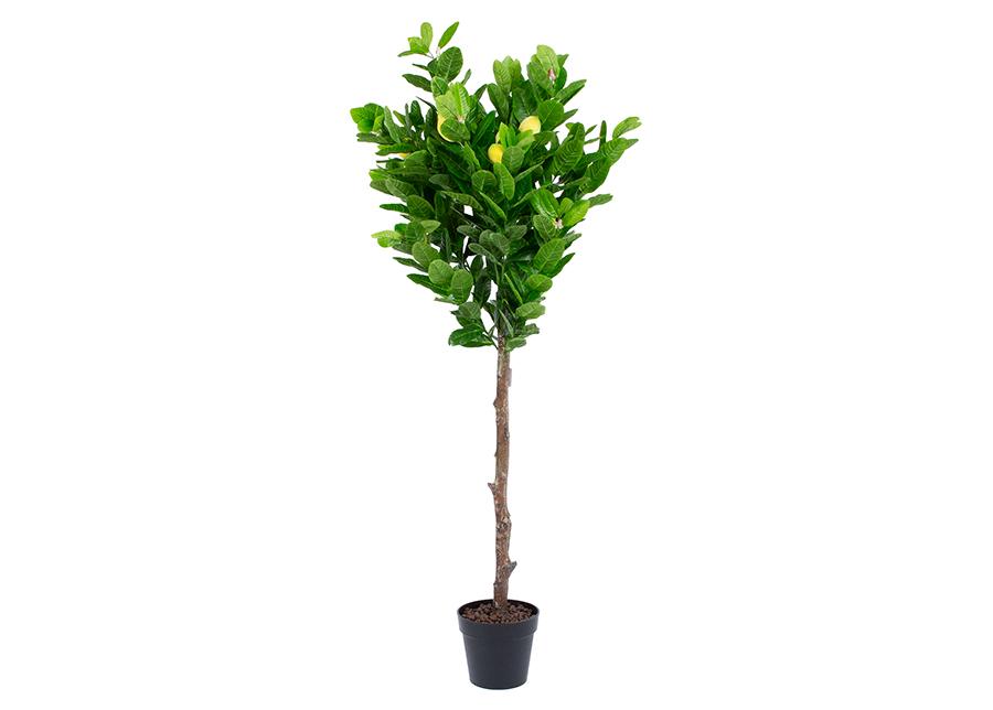 Tekopuu Sitruunapuu 145 cm